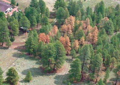 aerial photo of dying trees