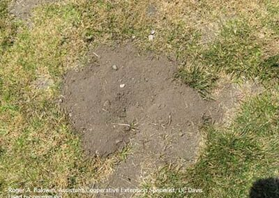 photo of gopher hole
