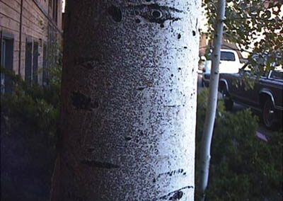 photo of scale insects